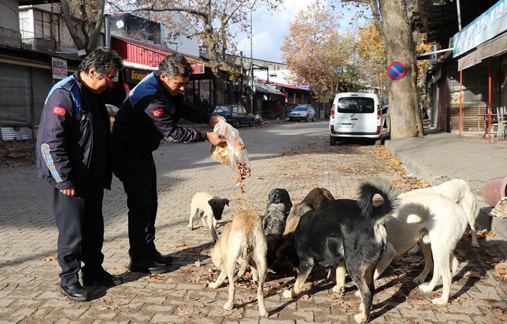Pozantı Zabıtası Akçatekir Yaylasında Sokak Hayvanlarını Besliyor